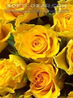 مجموعه عکس گل تصاویر نرم افزار  - سافت گذر