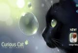 دانلود Curious Cat 1.2.0 for Android +2.1