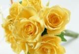 دانلود مجموعه عکس گل