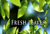 دانلود Fresh Leaves 1.8 for Android +2.1