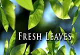 دانلود Fresh Leaves 1.8 for Android +2.1