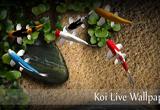 دانلود Koi Live Wallpaper 1.5 for Android