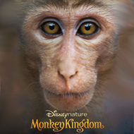 دانلود Monkey Kingdom