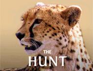 دانلود The Hunt