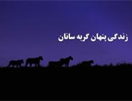 دانلود مستند زندگی پنهان گربهسانان با دوبله فارسی