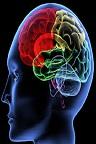 دانلود پوست، جمجمه و استخوانهای سر، مغز در طب اسلامی