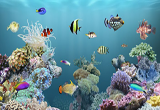 دانلود aniPet Aquarium Live Wallpaper 2.5.2 for Android +2.1